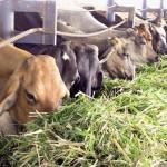 sector ganadero respalda