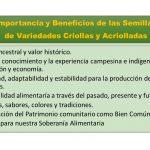 importancia-semillas-criollas