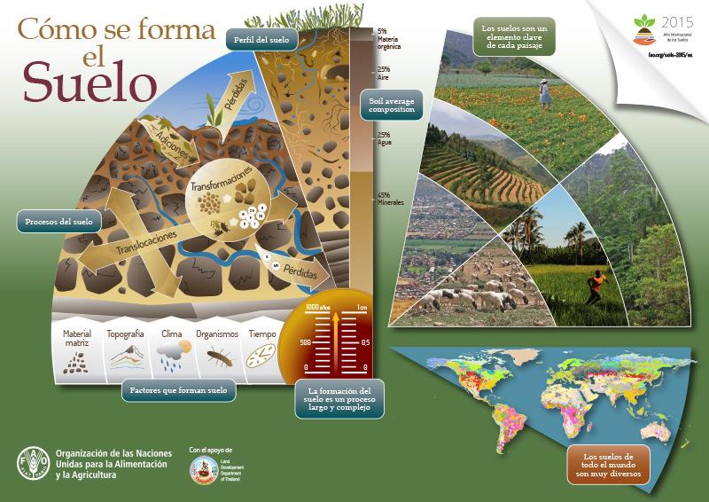 C mo se forman los suelos uni n nacional de agricultores for Como se forma y desarrolla el suelo