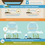FAO-Infographic-IYS2015-fs6-es