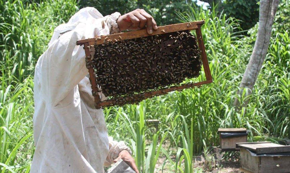apicultores2