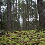 bosque-800