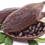 cacao nicaraguense3