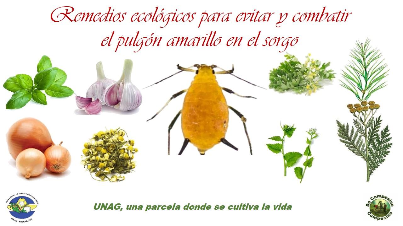 Remedios ecológicos para evitar y combatir