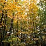 bosques5