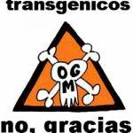 transgenicos11