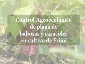 Control Agroecológico de las babosas